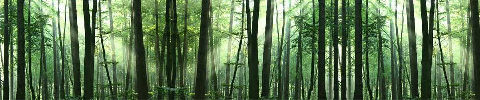 Forst Mit Sonne und CO2 zum Werkstoff